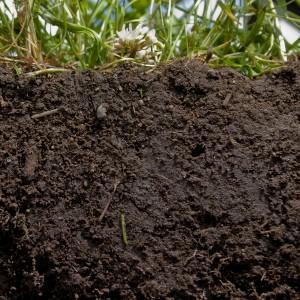 Soil Cross Section
