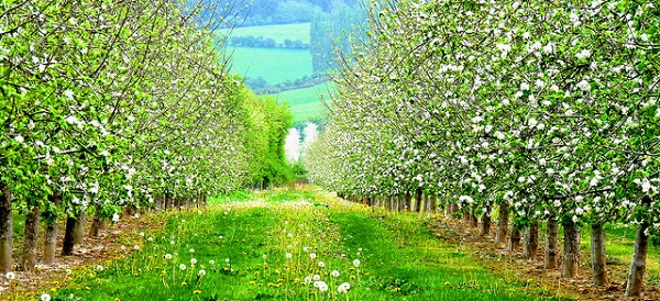 Fruit Tree Orchard