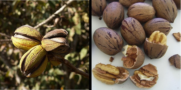 How To Grow Fruit And Nut Trees In Zone 5 7 More Living Off