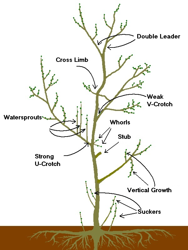 Pruning - Tree Pruning Terms (white)
